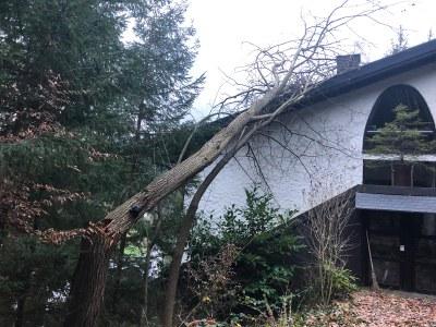 07.12.2018 Tannenweg Sturmschaden