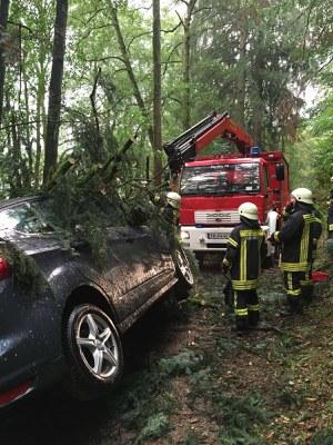 14.09.2016 Baum auf Fahrzeug 4
