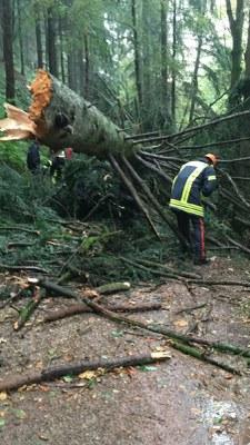 14.09.2016 Umgestürzter Baum Gutach