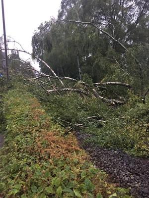 14.09.2017 Baum auf Straße und Bahnlinie 1
