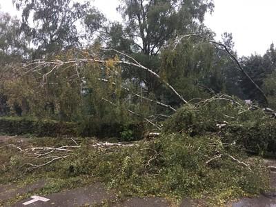 14.09.2017 Baum auf Straße und Bahnlinie 2