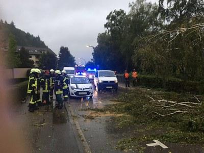14.09.2017 Baum auf Straße und Bahnlinie 3