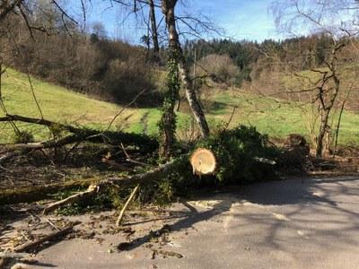 17.03.2019 Sturmschaden Dettenbach 1