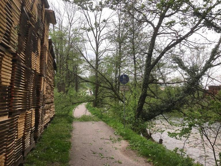 24.04.2019 Sturmschaden Stadtsäge Elzweg