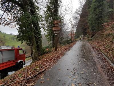 25.11.2017 Baum Kohlenbach