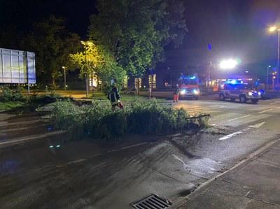 26.05.2020 umgestürzter Baum, Lidl