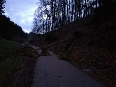 27.03.2021 Umgestürzter Baum, Kohlenbach