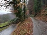 Baum über Straße, Kohlenbach