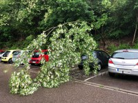 Baumbruch, Parkplatz Heitereweg