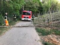 Beseitigung Baumbruch