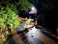 Schmorbrand im Motorraum, umgestürzter Baum und Unterstützung Rettungsdienst