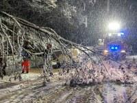 Schneebruch im Stadtgebiet