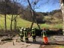 Umgestürzte Bäume, Dettenbach