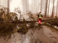 Umgestürzte Bäume, L186 gesperrt