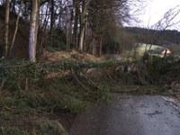 Umgestürzter Baum
