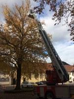 Unterstützung der Technischen Betriebe Waldkirch
