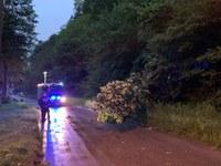 Unterstützung Rettungsdienst und Baum auf Straße